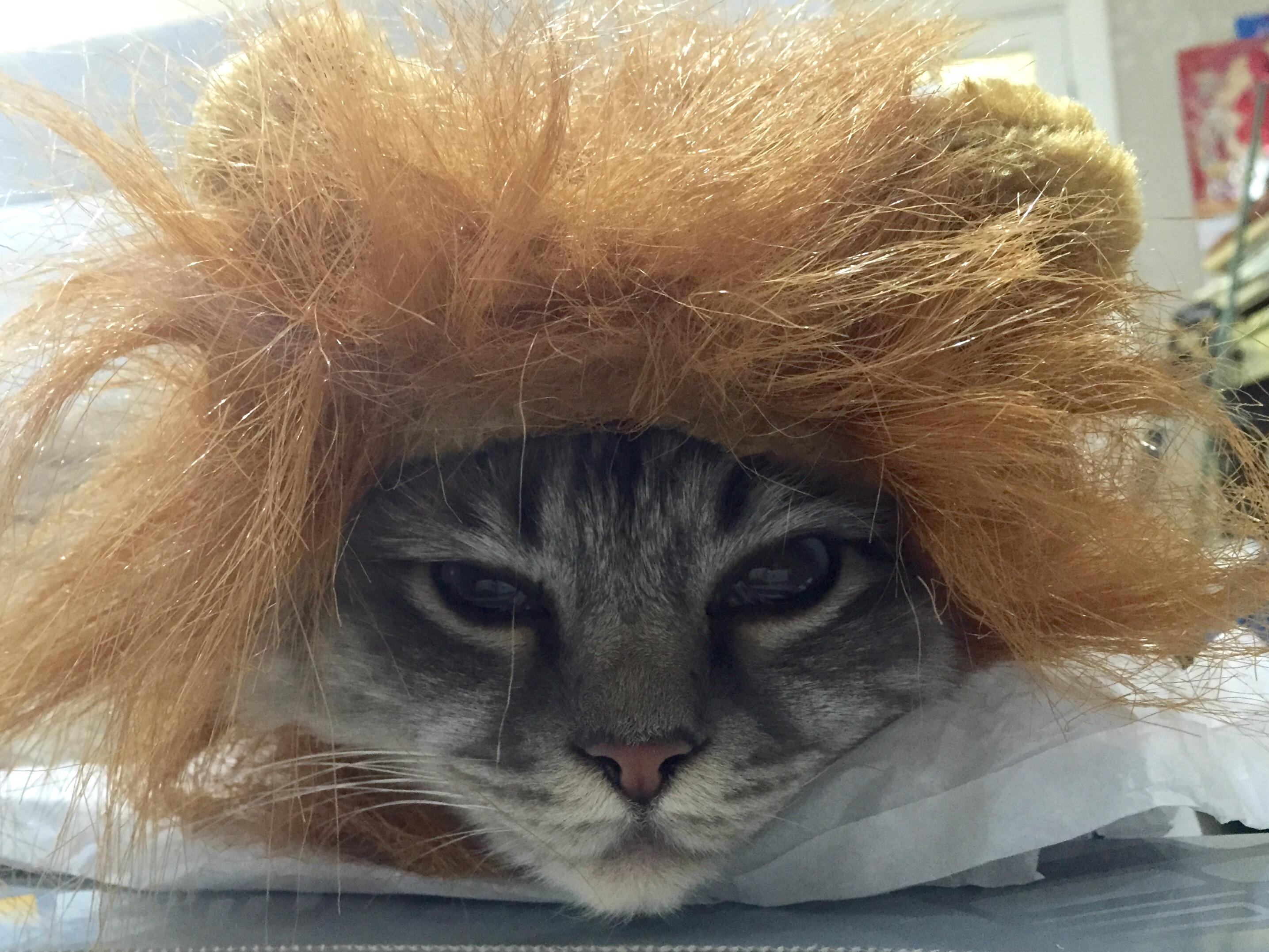 Cat Lion Fancy Dress